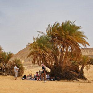 03890 – Egypte – Westelijke Woestijn – Ain El Maqfi