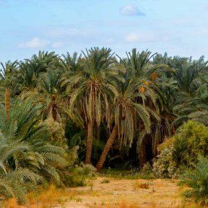 Bahariya-Oasis-tour-egypt